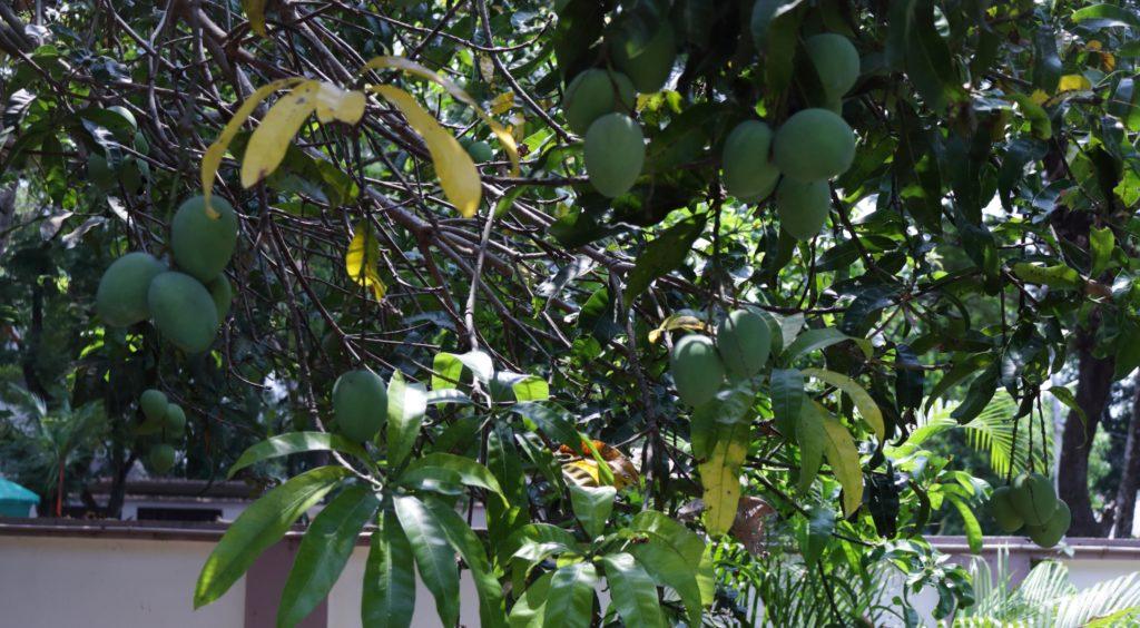Aam Panna / www.quichentell.com